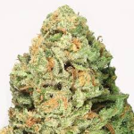 fruit punch heavyweight seeds