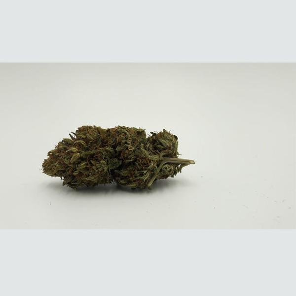 seedbis-black-mamba-flower