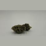 seedbis-orange-bud-flower