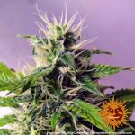 blue-cheese-auto_7_140918