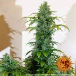blue-cheese-auto_9_140918