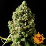 pineapple-express-auto_7_245292 (1)