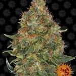 pineapple-express-auto_circle_new_12_864997 (1)