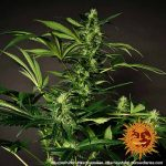 purple-punch_5_212728