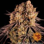 purple-punch_6_250385