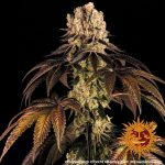 purple-punch_7_250385