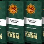 tropicanna-banana_packet_1_seed